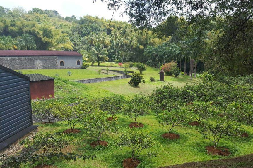 Découvrez la Martinique authentique