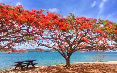 5 bonnes raisons de découvrir la Martinique au mois de juin